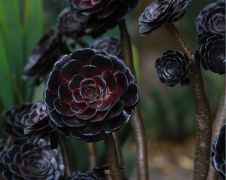 Spooky Plant and Flower Ideas to Make Perfect Goth Garden 45