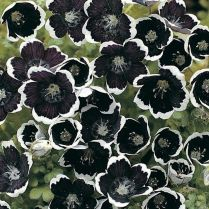 Spooky Plant and Flower Ideas to Make Perfect Goth Garden 55