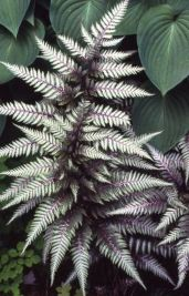 Spooky Plant and Flower Ideas to Make Perfect Goth Garden 7