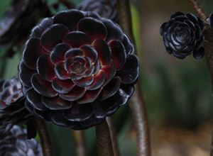 Spooky Plant and Flower Ideas to Make Perfect Goth Garden