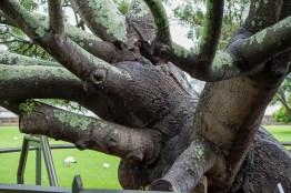 The Royal Botanic Garden, looks like an octopus
