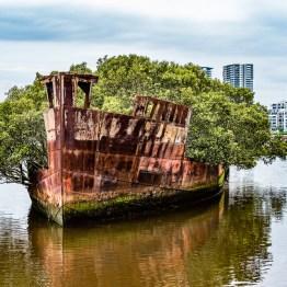 Floating forest, Homebush Bay