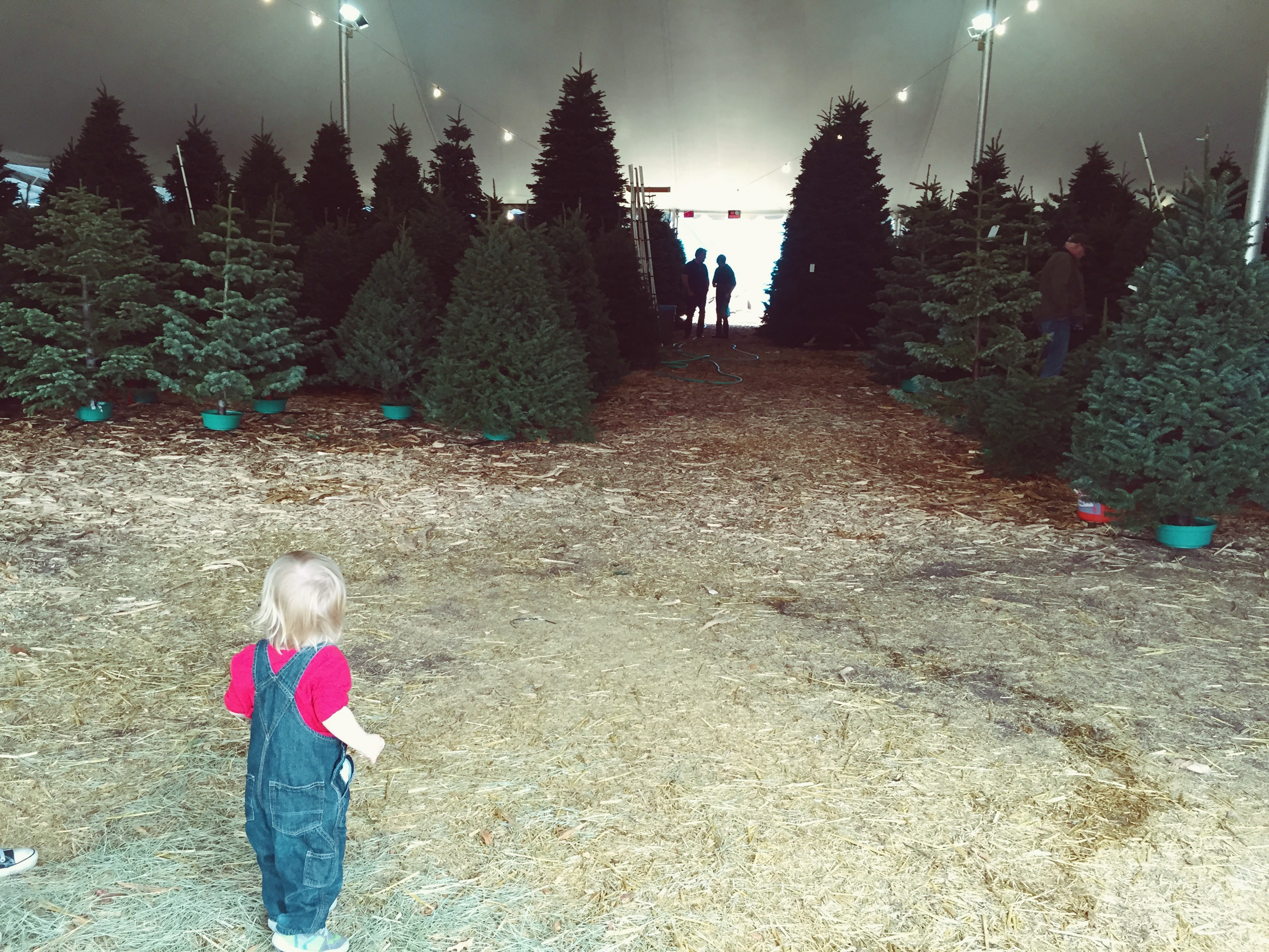 The Ultimate Guide to Christmas in Los Angeles...Part 1: Oh ...