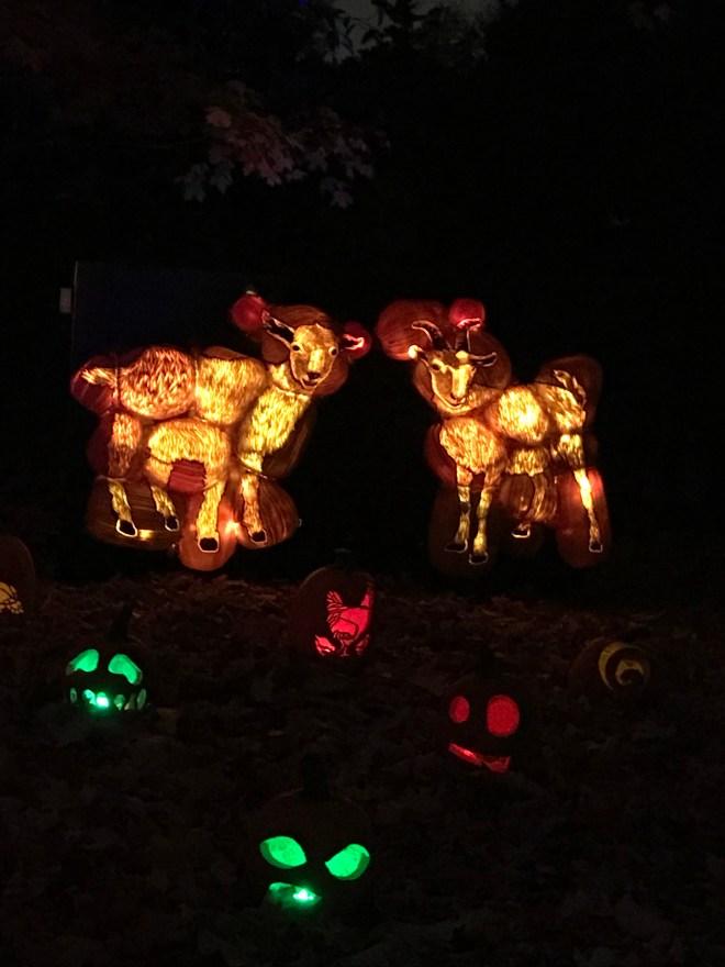 The Rise Of The Jack O Lanterns, Halloween, Spooky Walk, pumpkins, pumpkin carving