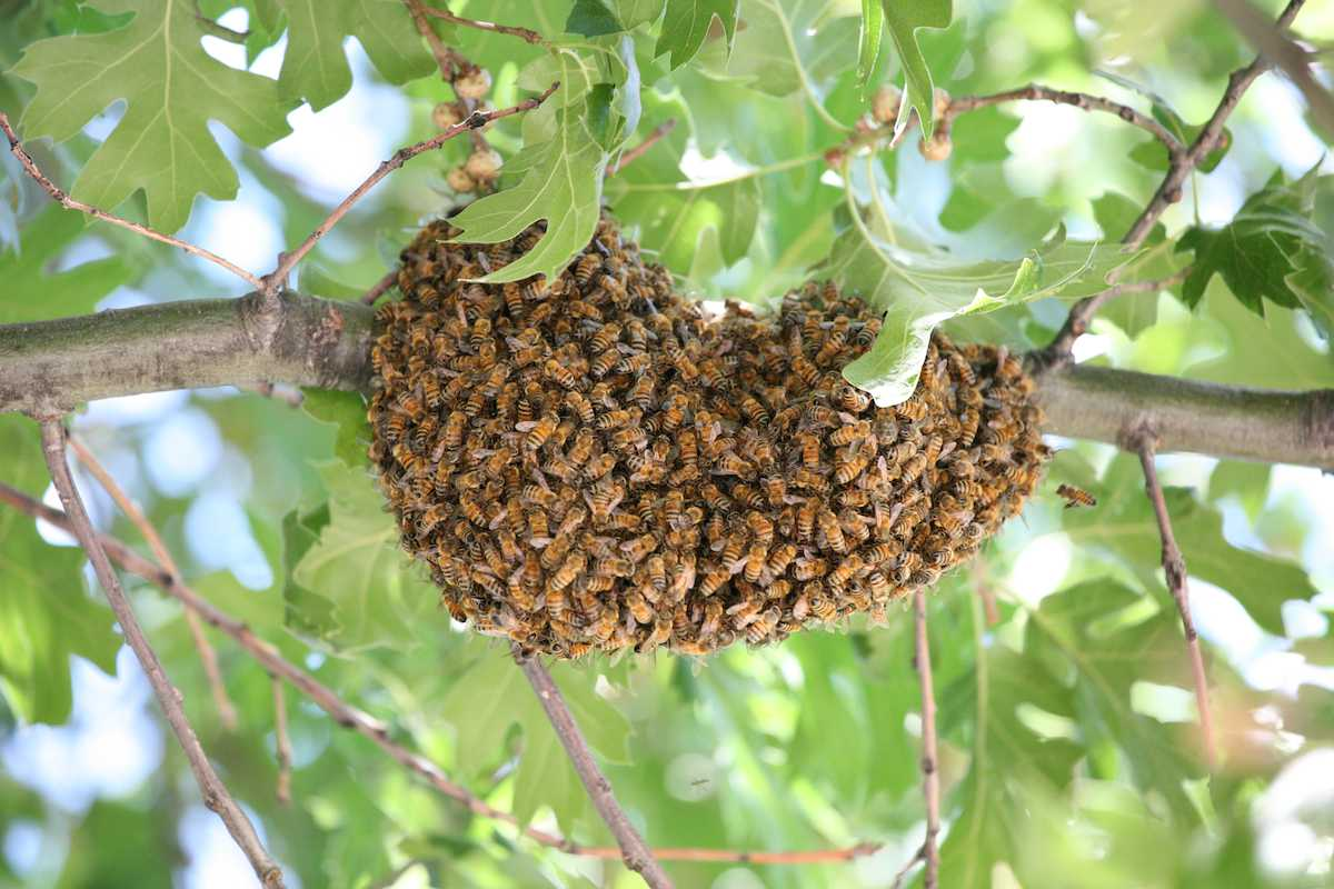 Rockland Bee Removal offers Free Honey Bee Removal and Rescues to Rockland Residents