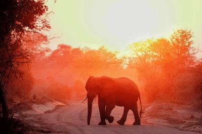 Malawi, Zambia & Botswana Tour 1