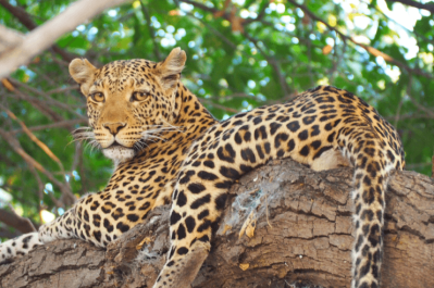 Malawi, Zambia & Botswana Tour 10