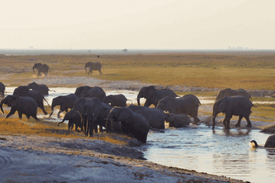 Malawi, Zambia & Botswana Tour 13