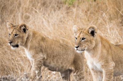 South Africa, Swaziland & Mozambique Tour 15