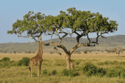 Kenya & Tanzania (11) (1)