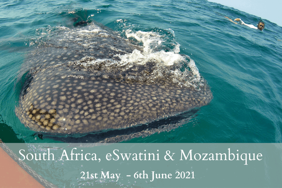South Africa, eSwatini & Mozambique Tour