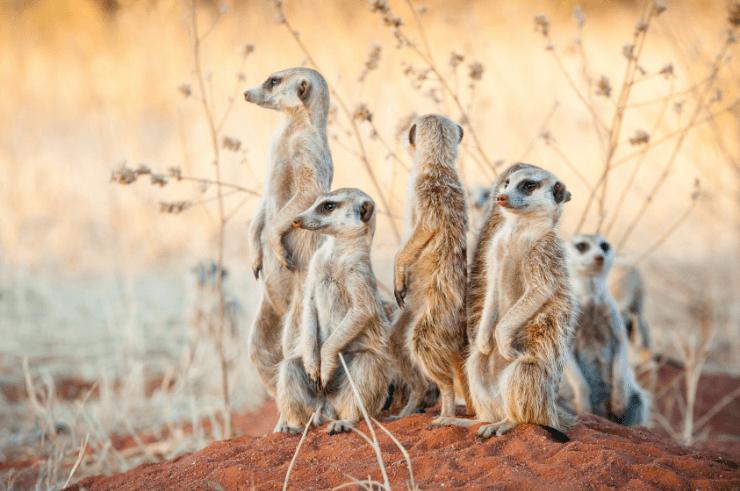 Botswana Group Tour
