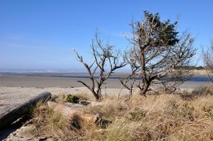 Ona beach where to find oregon agates