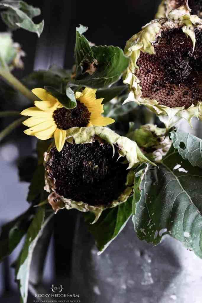 Dried Sunflower Bouquet