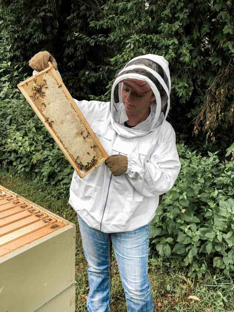 Backyard Beekeeping for Beginners - Everything You Need to Know