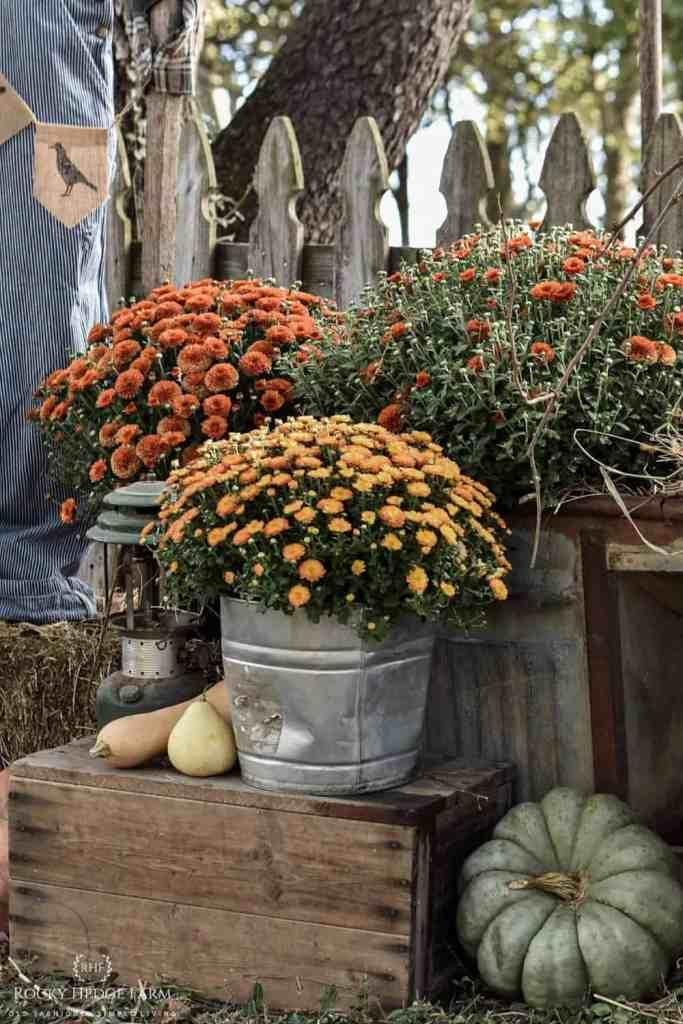 Country Farmhouse Fall Yard