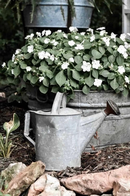 low maintenance shade garden plants