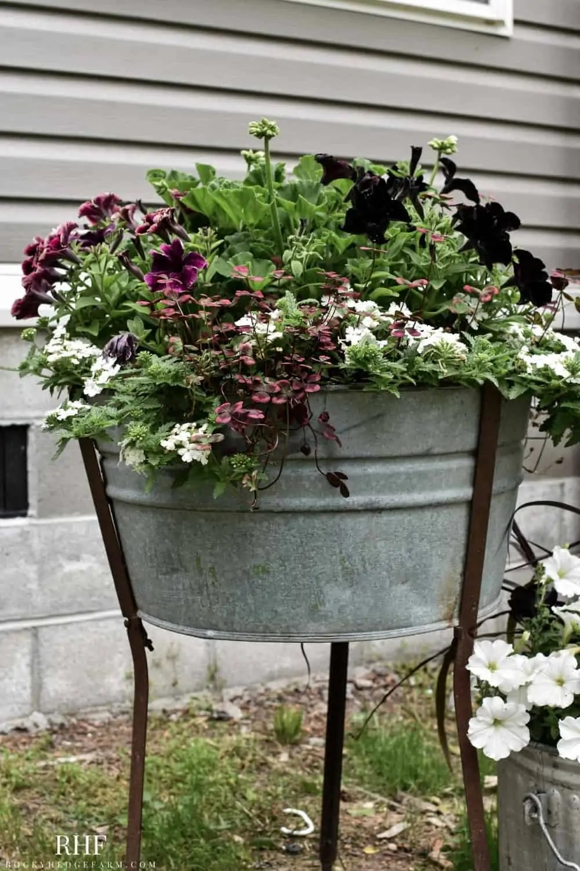 Flower Plant Combination