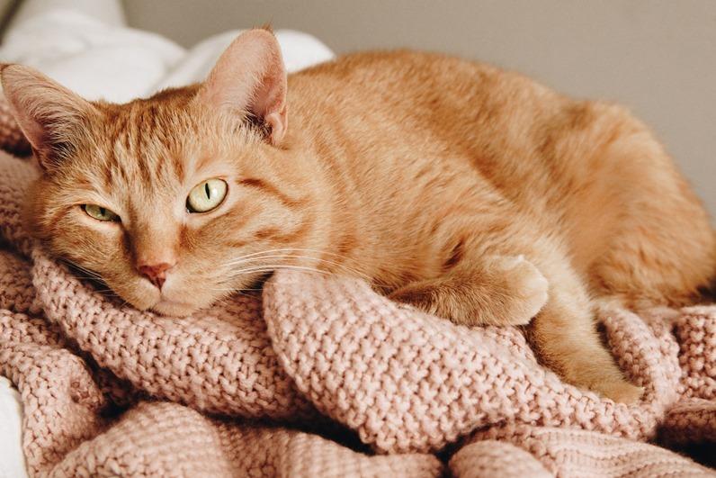 日本人很喜歡貓 ,amber-renae-72sVIx2T4C4-unsplash