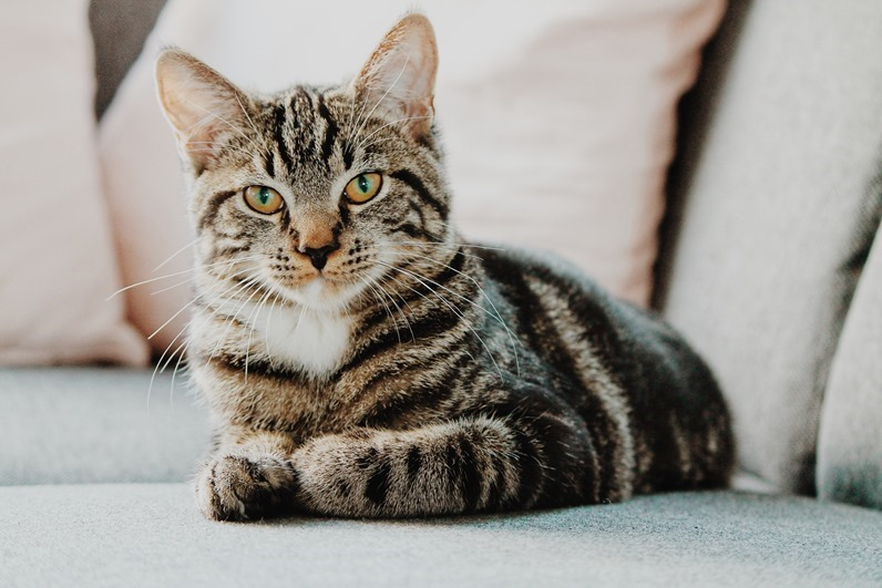 你知道為什麼 日本人很喜歡貓 嗎? 1