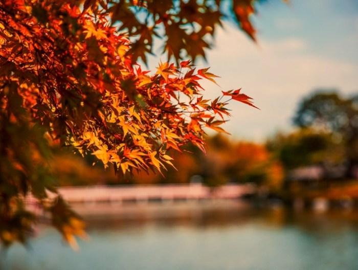 5 個最佳日本 東京賞楓 的地點推薦,市區、郊區都有 7