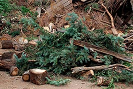 Image result for dump yard debris