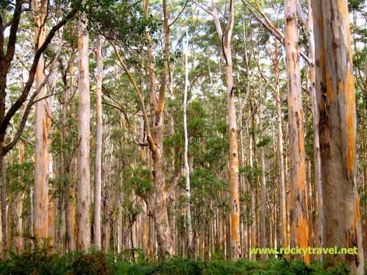 Boranup Forest2