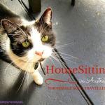 Housesitting in Australia as a solo traveller