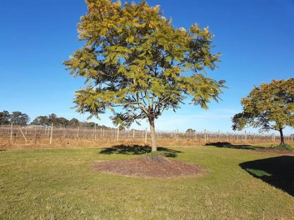 Capercaillie Wines Hunter Valley