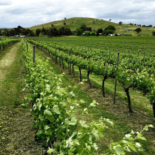 Murrambateman Vineyards Canberra
