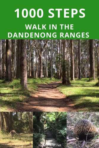 The 1000 Steps Trail in the Dandenong Ranges