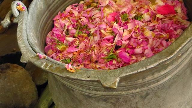 Rose Picking Rose Valley Bulgaria