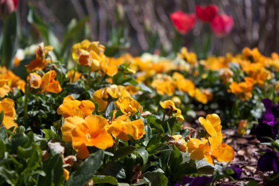 """Yellow Flowers"""