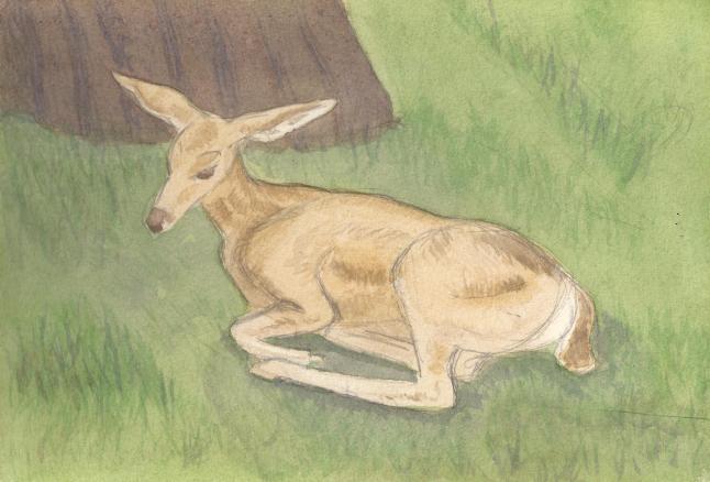 doe painting