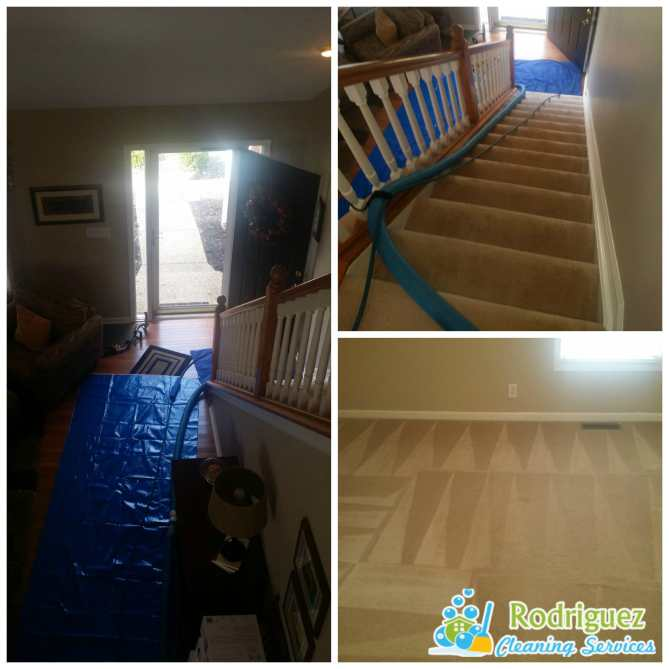 Professional steam carpet cleaning louisville