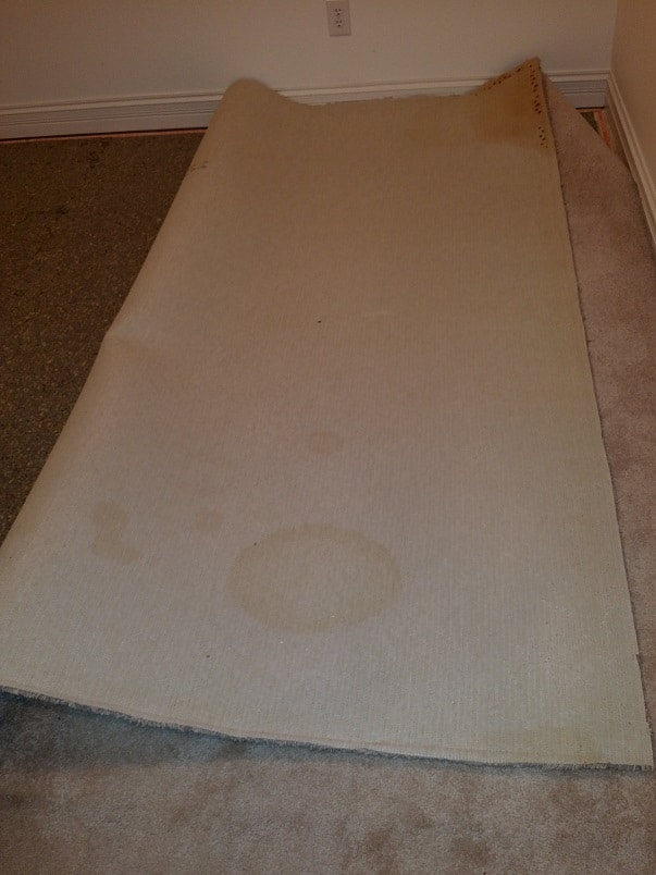 Carpet damage with Pet Urine, Pet stain and Odor removal service