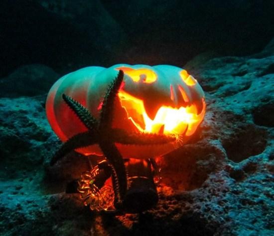 pumpkin underwater