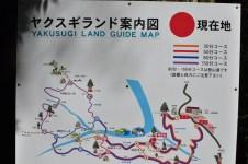 Yakusugi Land