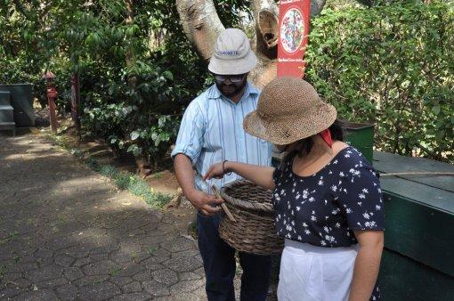Koszyk do zbierania kawy w Kostaryce