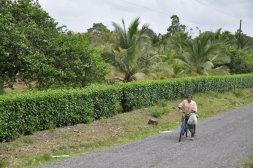 Mieszkaniec okolic Tortuguero