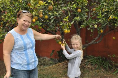 Oliwia zbiera pomarańcze z ogródka