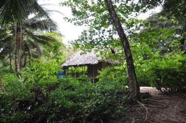 Domek w dżungli