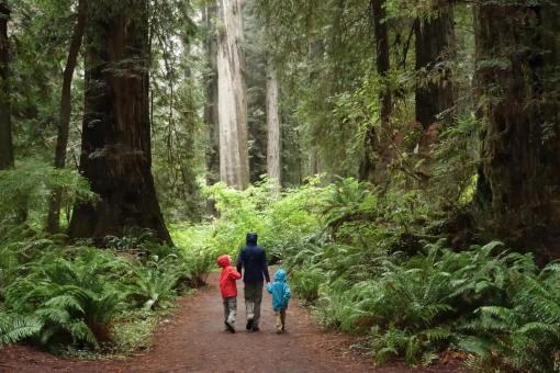 Park Narodowy Redwood