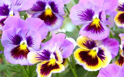 Winter Plants for Bloom and Color