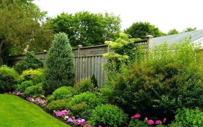 Landscaping Ideas for Full Sun Yards