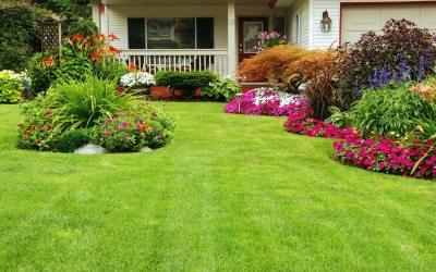 DIY or Lawn Treatment Service?