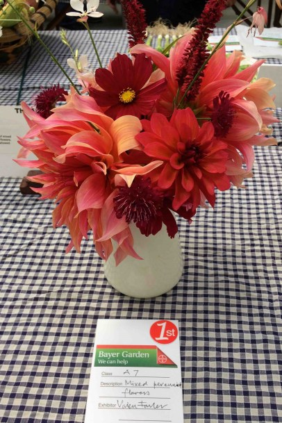 The best Dahlia Collection