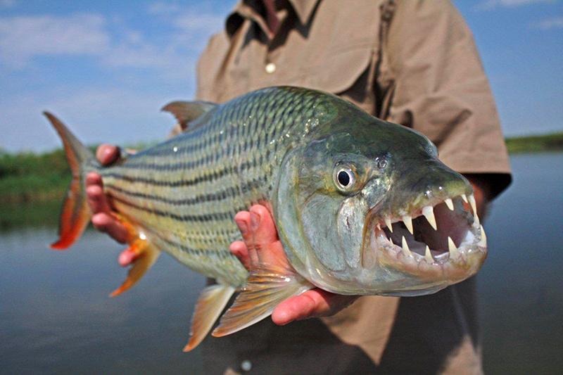 suid-afrika-vis