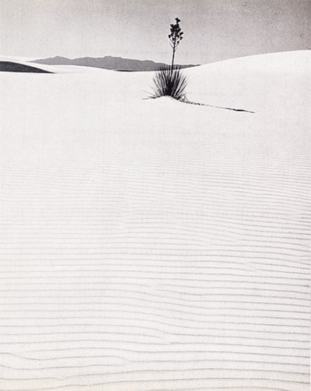 Dunes (1955) - Fritz Henle