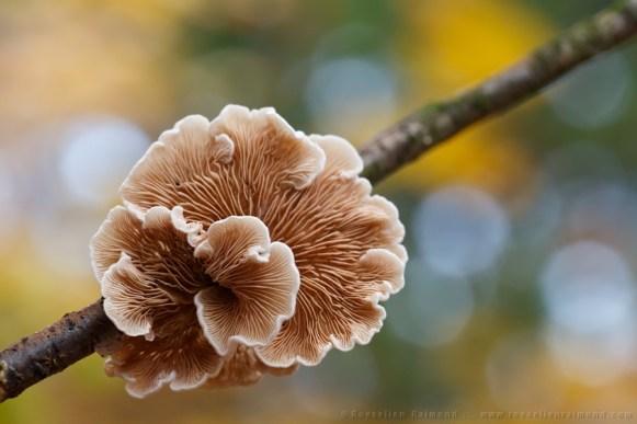Mushroom in an autumn forest
